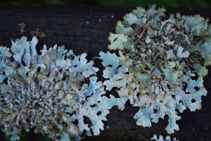 Lichen on our garden bench